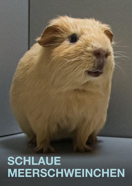 The Secret Lives of Guinea Pigs
